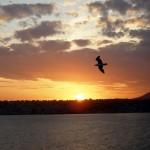 Italian_sunset_bird