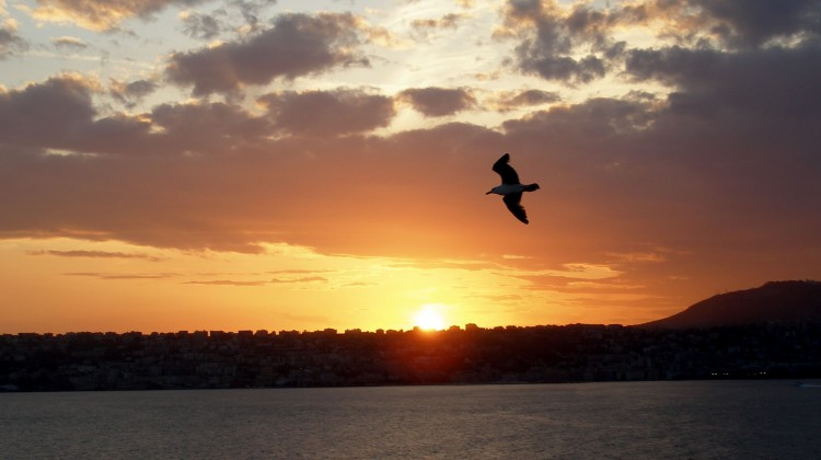 Italian_sunset_bird